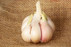 Garlic against rough linen fabric Royalty Free Stock Photography