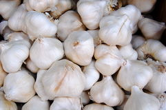 Garlic, Allium sativum Stock Photography