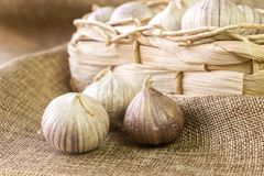 Garlic on the fabric next to the wicker basket. Garlic Allium sativum on the fabric next to the wicker basket royalty free stock photo