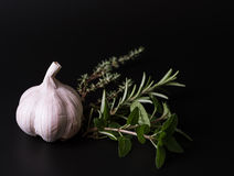 Garlic and aroma herbs Royalty Free Stock Photo
