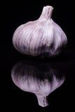 Garlic. An artistic head of garlic Stock Image