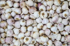 Garlic. Background - full frame of garlic, ready for sale Stock Images