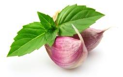 Garlic and basil. Close up royalty free stock image