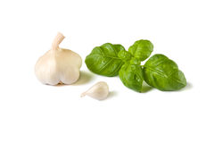 Garlic and basil. Fresh garlic and basil with drops of water on its leaves isolated on white background stock photography