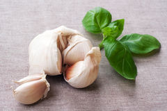 Garlic and basil, sitll life. Royalty Free Stock Photography