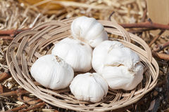 Garlic in the basket Stock Photos