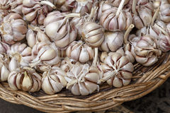 Garlic in a basket Royalty Free Stock Photos