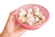 Garlic in basket Royalty Free Stock Photo