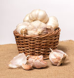 Garlic on basket. Some garlic heads and a basket container on plain background Stock Images