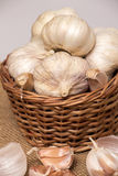 Garlic on basket. Some garlic heads and a basket container on plain background Stock Image