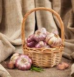 Garlic in a basket Stock Image