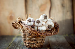 Garlic in a  basket. Stock Images