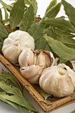 Garlic and bay leaf Stock Image