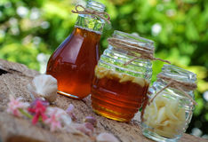 Garlic in bee honey, remedy skin care. Healthy food from nature herbal, garlic soak in bee honey, a herb remedy for skin care, healthcare, three jar on green Stock Image