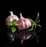 Garlic  on black backg Stock Images