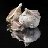 Garlic Royalty Free Stock Photography