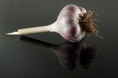 Garlic on black mirror. Purple garlic on black mirror Royalty Free Stock Photo