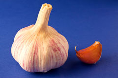 Garlic on blue Stock Photos