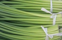 Garlic bolt Stock Photo