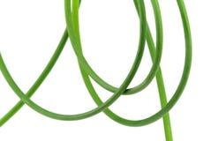 Garlic Bolt Stock Image