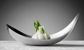 Garlic in a bowl Royalty Free Stock Images