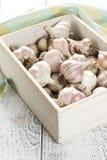 Garlic in box Stock Photography