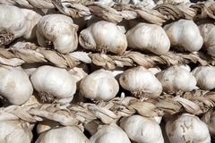 Garlic braid Stock Images