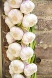 Garlic braid Royalty Free Stock Photos