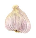 Garlic bulb Stock Images