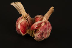 Garlic bulb Royalty Free Stock Images