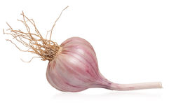 Garlic bulb Royalty Free Stock Image