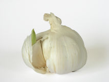 Garlic bulb. Isolated detail, clove sprouting Royalty Free Stock Photo