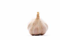 Free Garlic Bulb - Allium Stock Images - 7359644