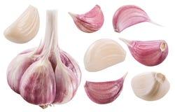 Free Garlic Bulb And Garlic Cloves. Clipping Path. Royalty Free Stock Photo - 129420365