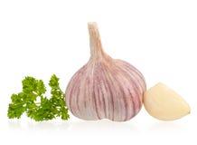 Garlic bulb Stock Photography