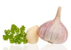 Fresh garlic bulb royalty free stock photos