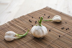 Garlic bulb with green leafs and pepper Stock Photography