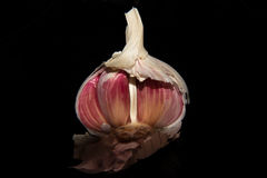 Garlic bulb/head split open showing individual garlic cloves with a black background stock images