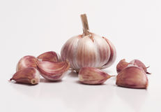 Garlic Bulb and a Individual Cloves Royalty Free Stock Images