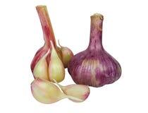 Garlic bulb isolated Royalty Free Stock Image