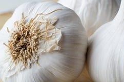 Garlic Bulb Roots Macro Stock Image
