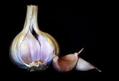 Garlic. A garlic bulb with two cloves stock photos
