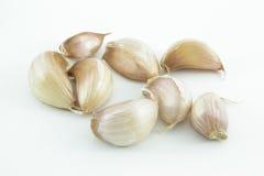 Garlic bulb on white background Royalty Free Stock Image