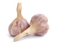 Garlic. Bulb on white background stock images