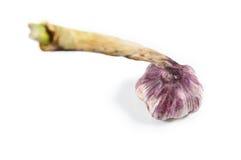 Garlic bulb  on white background Stock Images