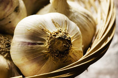Garlic bulbs Royalty Free Stock Photos