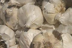 Garlic bulbs. A bunch of garlic bulbs Royalty Free Stock Images