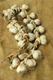 Garlic bulbs. Bunch of garlic bulbs on canvas background Stock Photography