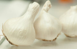 Garlic Bulbs. Three Garlic Bulbs in a row stock images