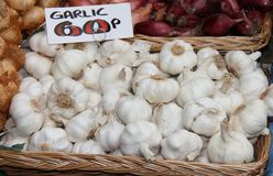 Garlic Bulbs. Stock Image